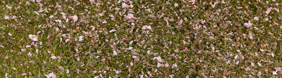 platki-kwiatow